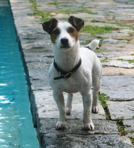 Baxter (Nolan) 2